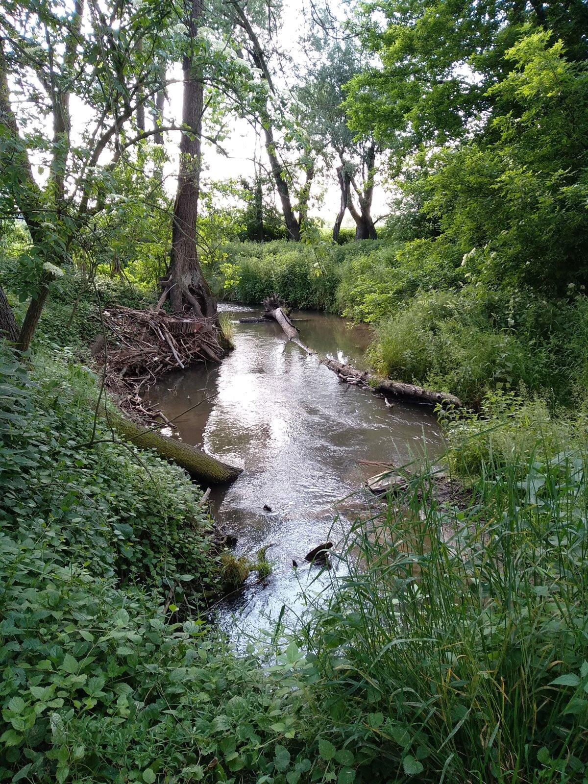 Dolina Prądnika - rzeka