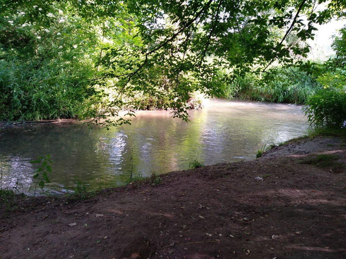 Brzeg rzeki w Dolinie Prądnika w Krakowie
