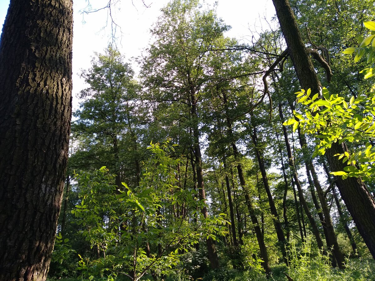 Drzewa przy rzece Prądnik