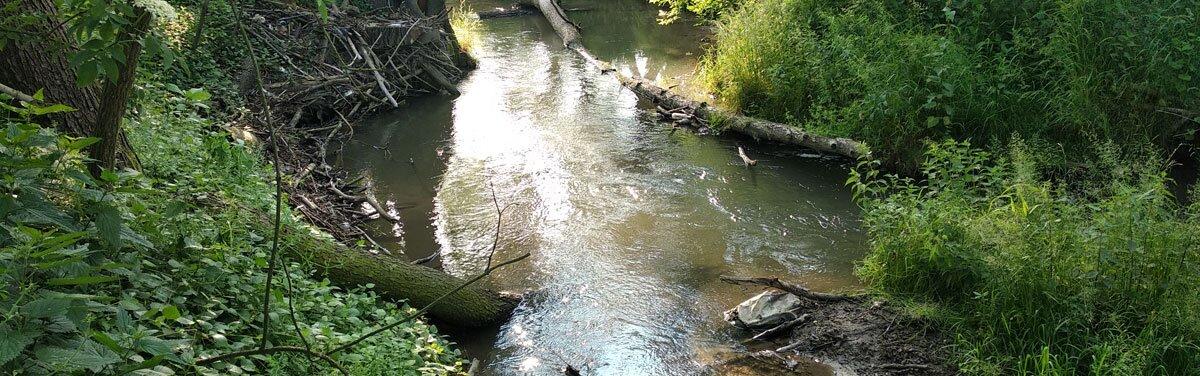 Dolina Prądnika - Zielonki - Kraków - spacer, wycieczka