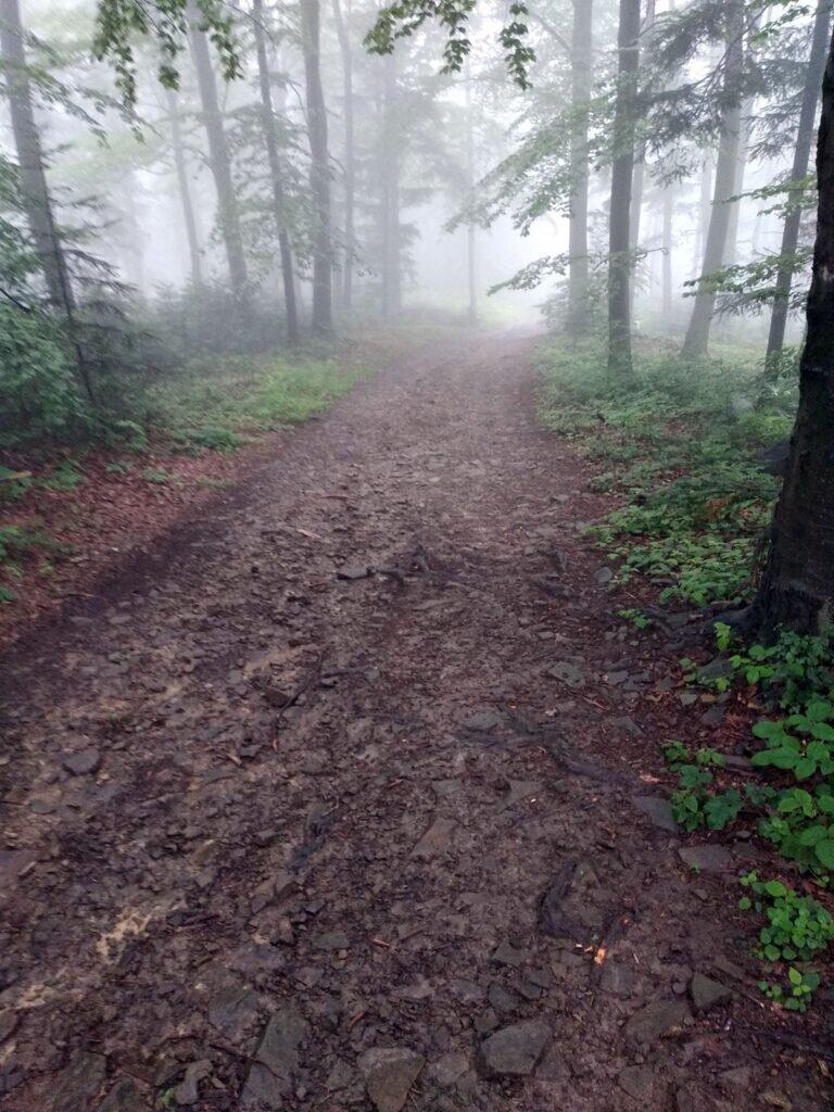 Klimatycznie w Myślenicach w lesie