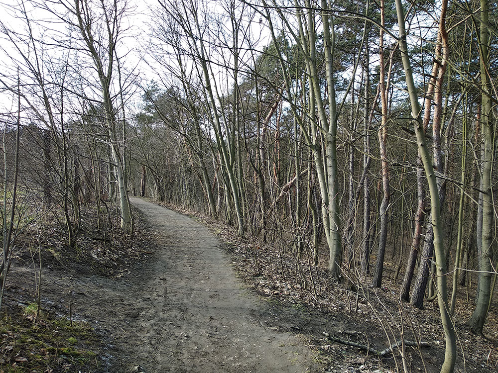 Ścieżka między drzewami